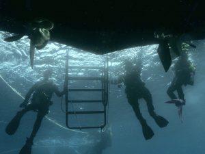 Boat Diver Specialty
