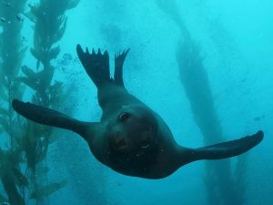 Phoenix Scuba Diving